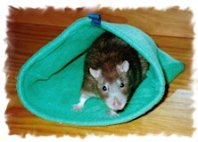 Гамаки для крыс