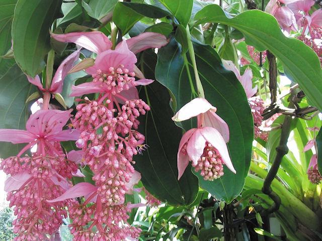 6 самых дорогих цветов в мире