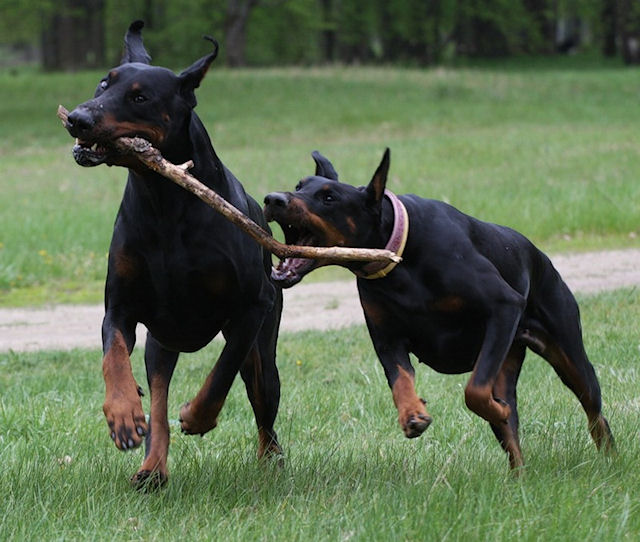 Агрессия собаки, обусловленная страхом
