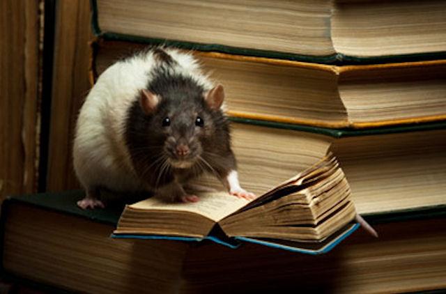 Американские ученые стёрли мышиную память