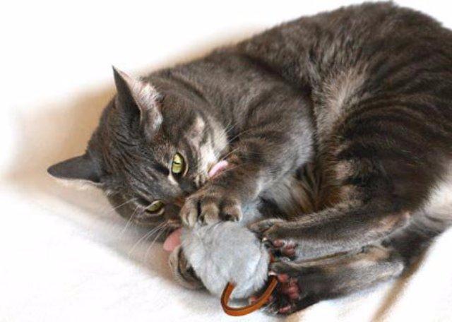 Ароматные мышки для игривых кошек