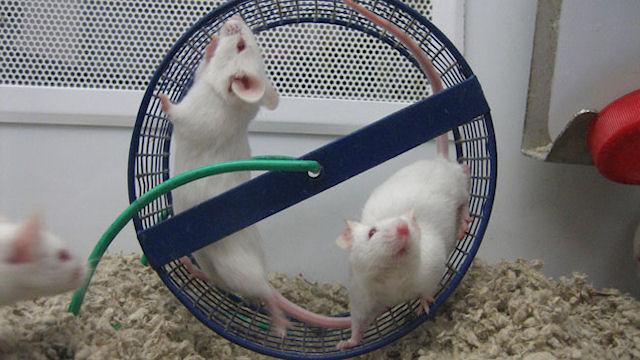 Бег предотвращает мышиную слепоту