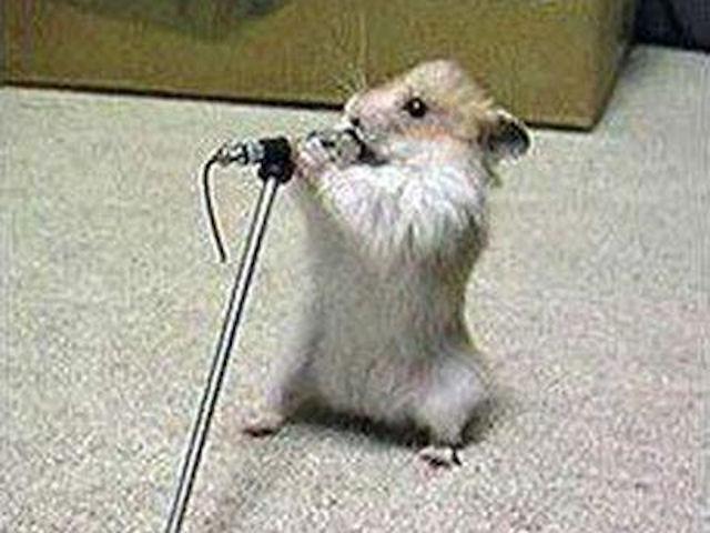 Биоинженеры из Японии заставили мышей-мутантов петь