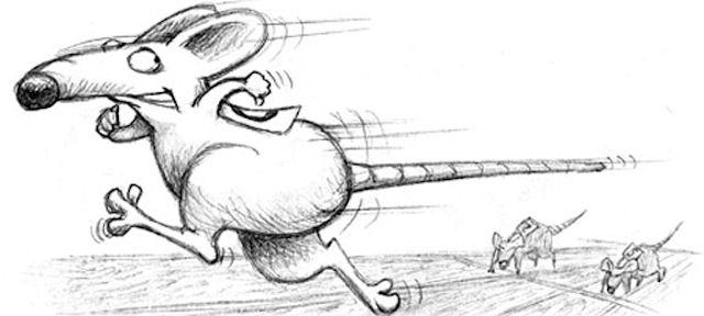 Черный ястреб стал фаворитом крысиных гонок