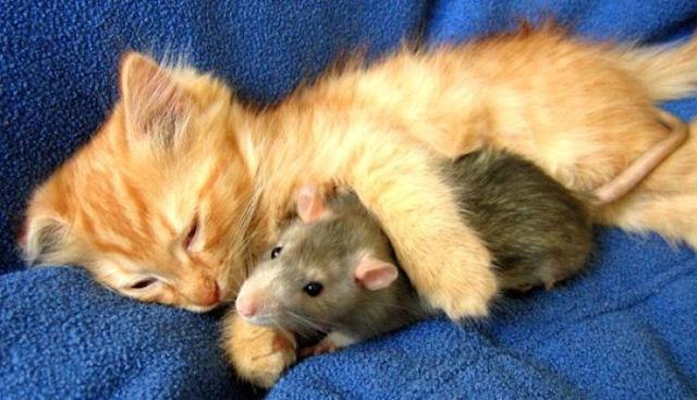 Чудесное «воскрешение» мышонка