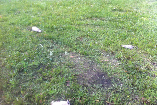 Дети из Екатеринбурга поиграли в броски дохлыми крысами