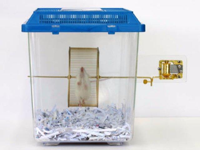 Для мышей создали оригинальную шарманку