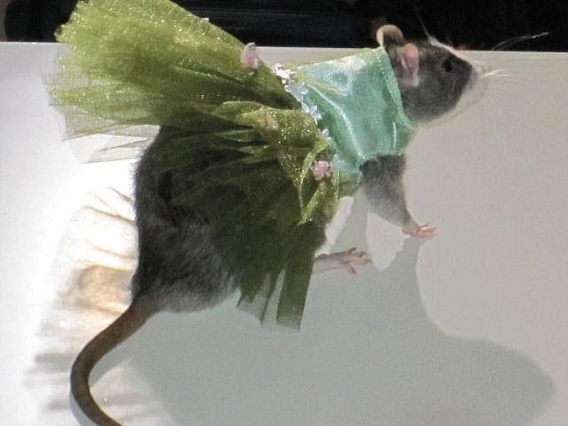 Дни крысиной моды в Нью-Йорке