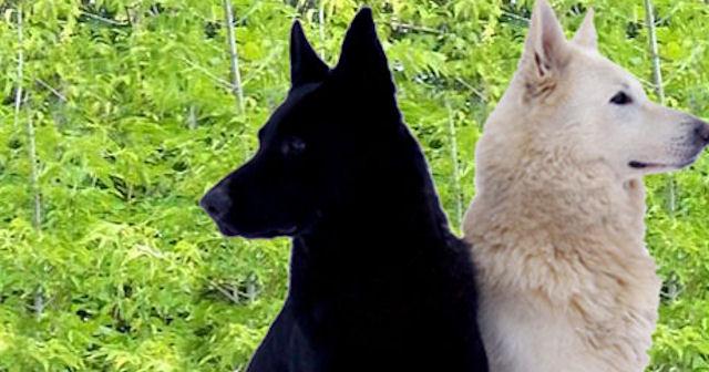 Дрессировка собак в Раменском