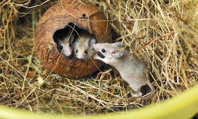 Екатеринбургский зоопарк отметит день грызуна