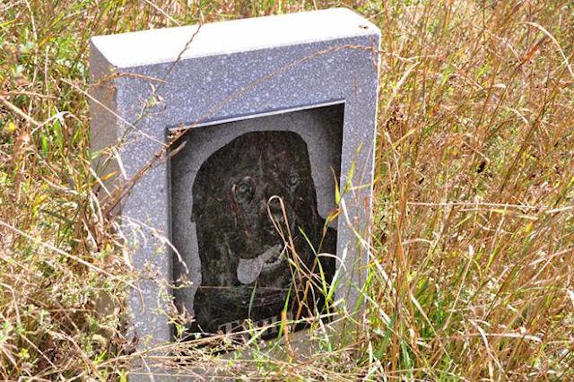 Где собака зарыта: как хоронят домашних животных