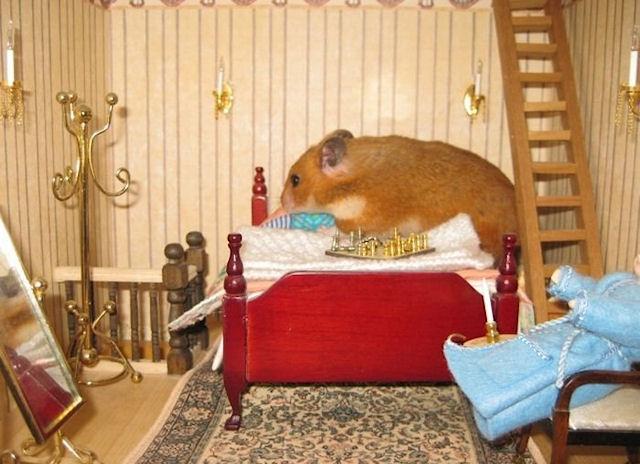 Идеальный дом для хомяка