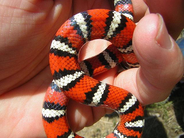 Канализация проложила змее путь в квартиру