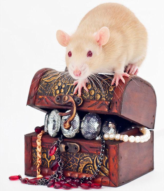 Карамелька и Казан пополнят ряды Казанского клуба любителей крыс