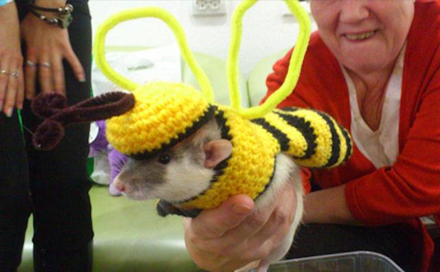 Клуб МОСК устроил импровизированную выставку крысиной моды