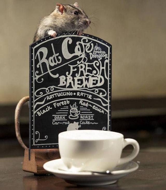 В Лондоне появилась кофейня для крыс