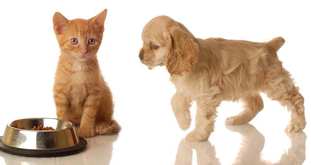 Корма для животных – доступно о важном