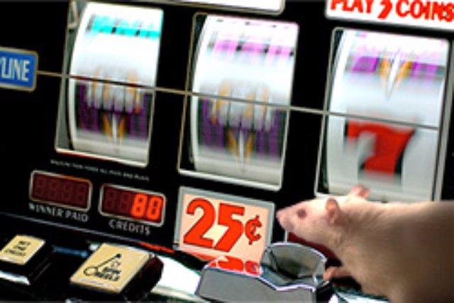 Крыс излечили от тяги к азартным играм