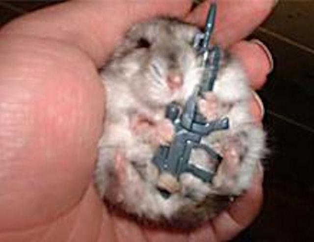 Крыса едва не лишила жизни 50-летнего британца
