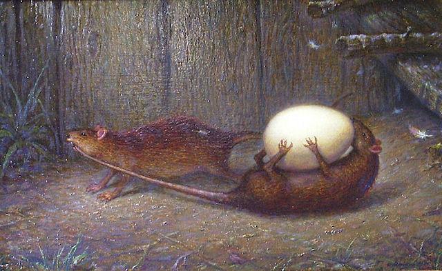 Крыса виновна в гибели 19-ти тысяч кур