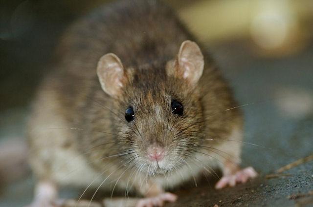 Крыса задержала вылет самолёта на 4,5 часа