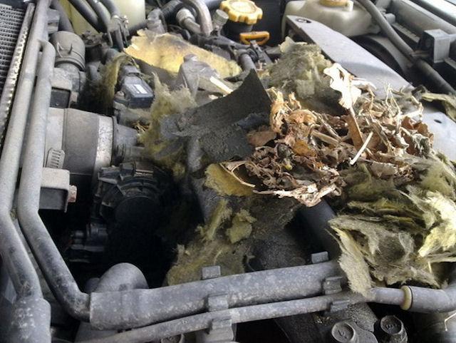Крысы атакуют машины на автостоянках Владивостока