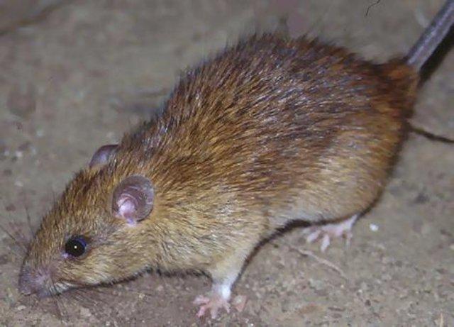 Крысы поиздевались над телом ребёнка