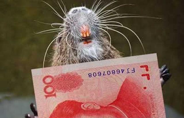 Крысы полакомились сбережениями китайского торговца