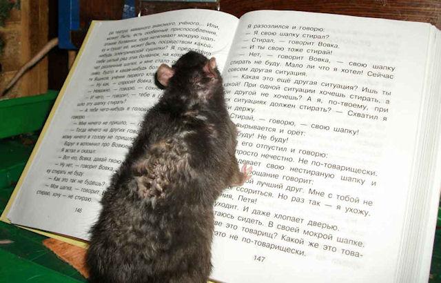 Крысы станут уничтожителями офисных бумаг