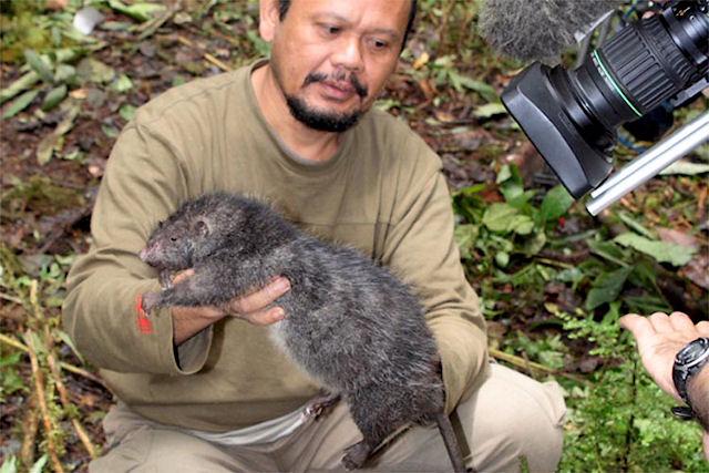 Ученые пророчат появление гигантских крыс в будущем