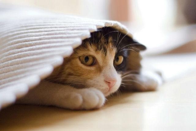 Слишком ласковый владелец – это стресс для кошки