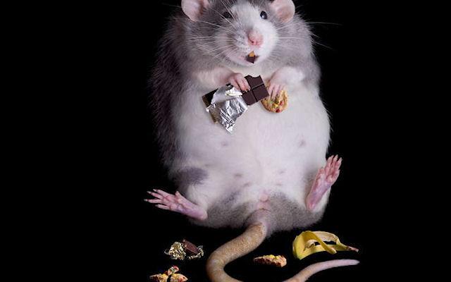 Лишние килограммы мешают борьбе с ожирением