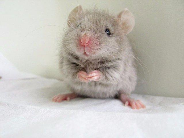 Маленькая мышка стала виновницей отмены авиарейса