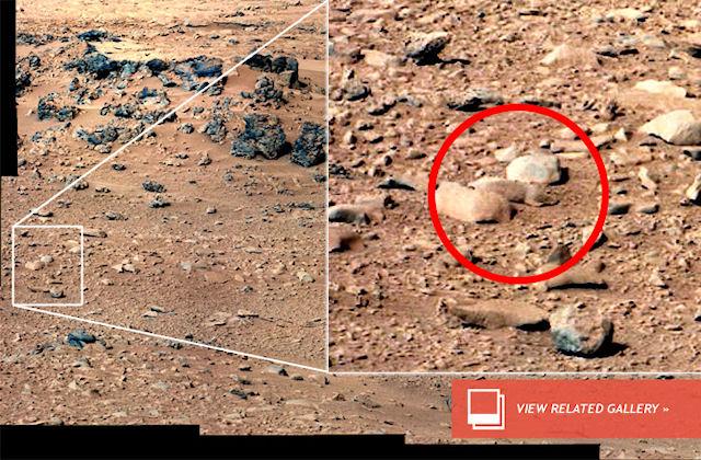 Крысы покоряют Марс?!