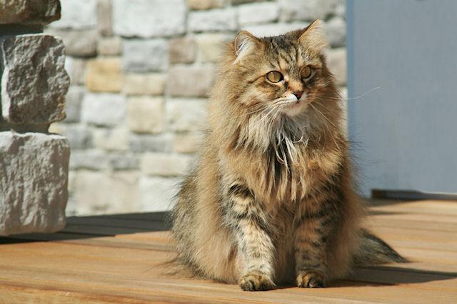 Минусы содержания кота в доме