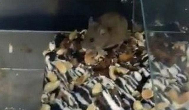 В Севастопольском супермаркете к покупке кондитерских изделий прилагалась мышь