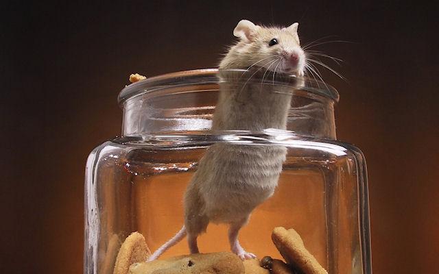 Мыши помогали викингами покорять планету