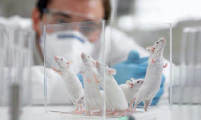 Мыши помогли найти ген, который отвечает за за шизофрению