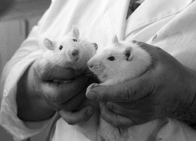 Мыши помогли разобраться в причине, по которой космонавты теряют зрение