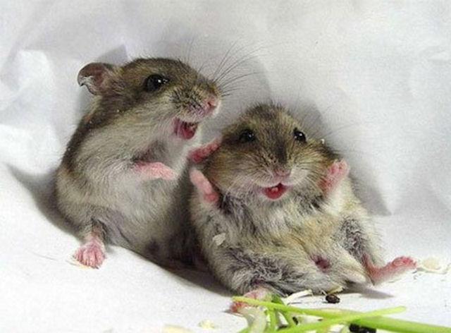На полицейский участок напали мыши-наркоманы