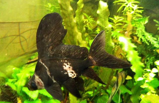 Самые необычные аквариумные рыбки