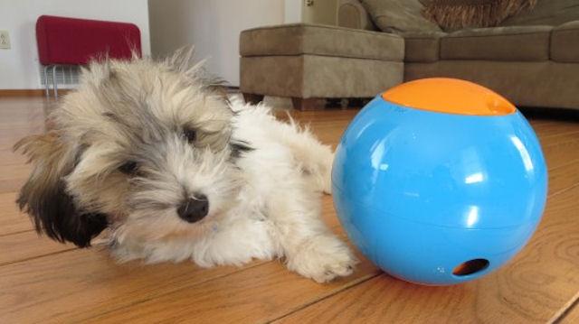 Няня и игрушка для собаки в одном шарике