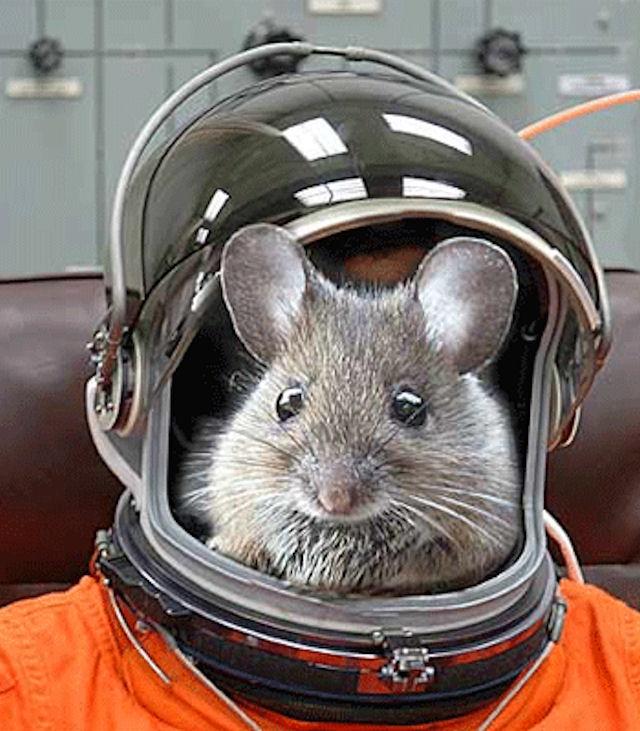 Обезьяна, кошка, кролик и мышь отправятся в космос