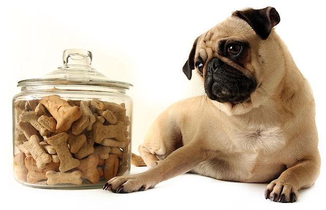 Сухой корм для животных несёт опасность для здоровья людей
