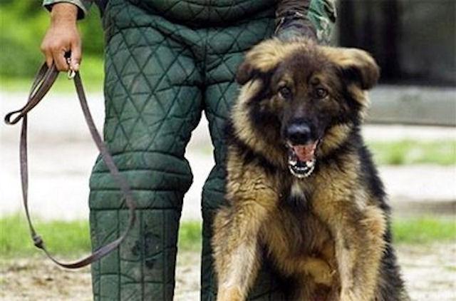 Оптимальные условия для содержания собак охранных пород