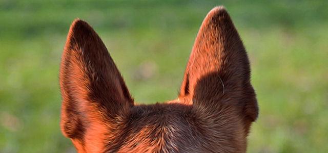 Особый уход за особенными ушами