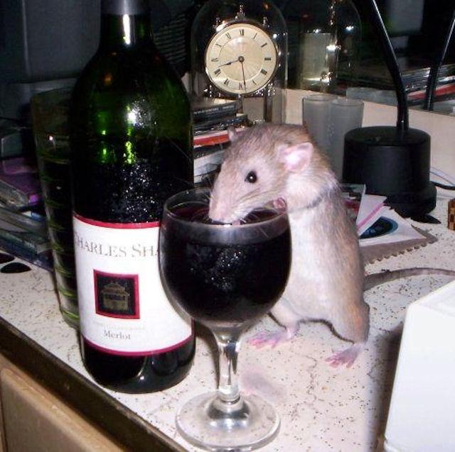 Ученым удалось избавить крыс от амфетаминовой зависимости