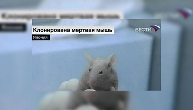 Японские ученые оживили мышей путём клонирования