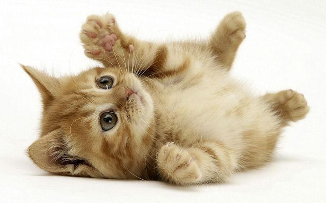 Подозрение на лишай у маленького котенка: что делать?