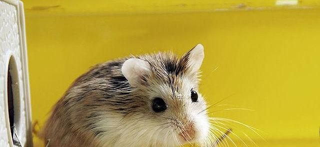Подросток отправился в тюрьму за издевательство над крысой